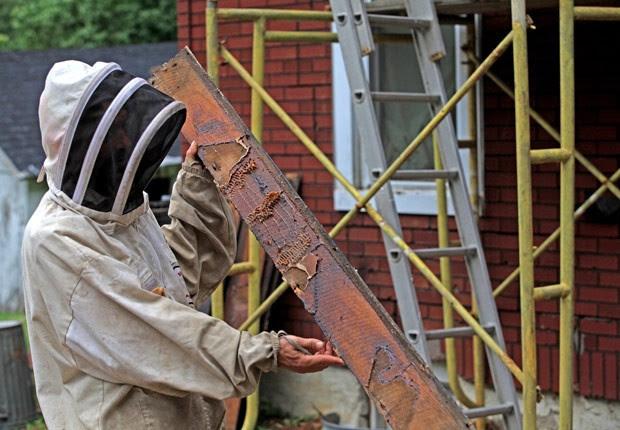 Marcel Witschard Jr. trabalha na retirada das abelhas (Foto: Elaine A. Ruxton/Times Herald-Record/AP)