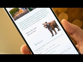 Mi A3 Google 3D Animal Experience Trick