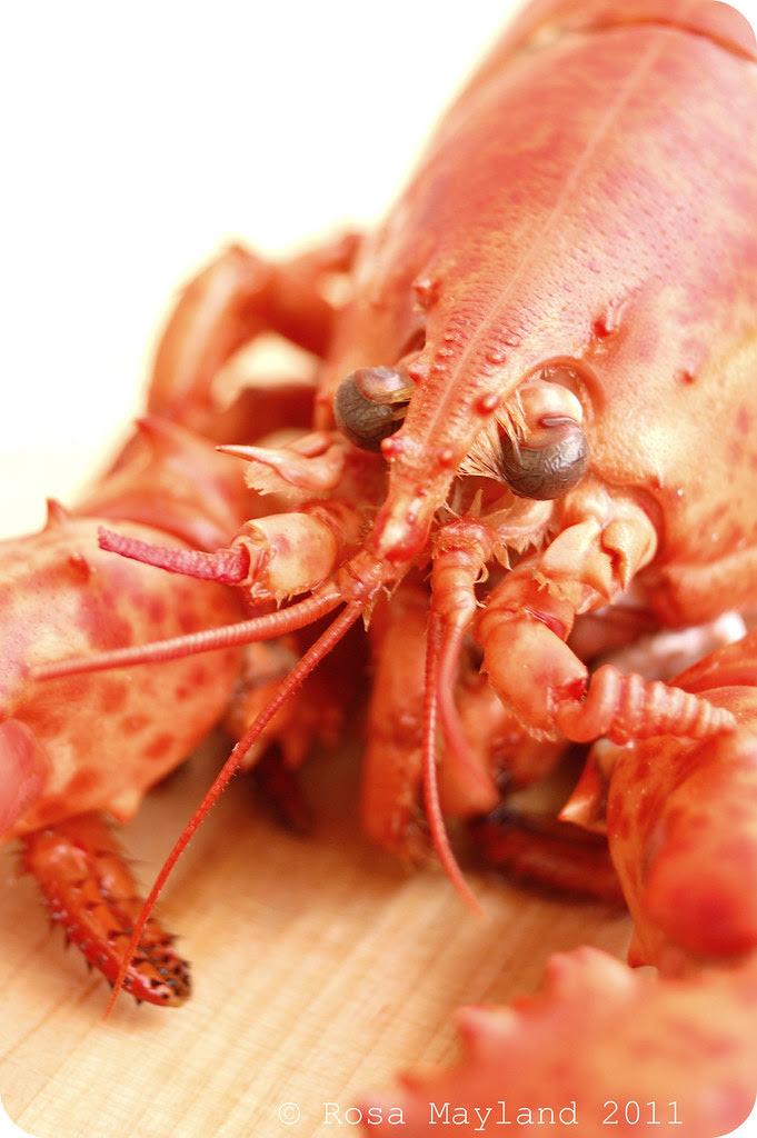 Lobster 5.1 bis