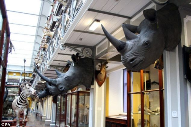 Stolen: A gang of thieves took these rhino heads from the National Museum in Ireland which have horns worth £427,000