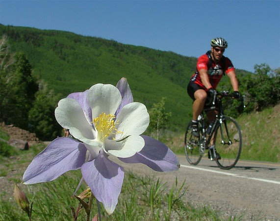 Columbine on the Grand Mesa