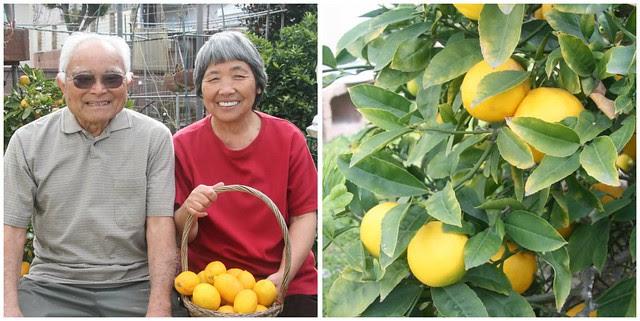 Lemon Week 2011