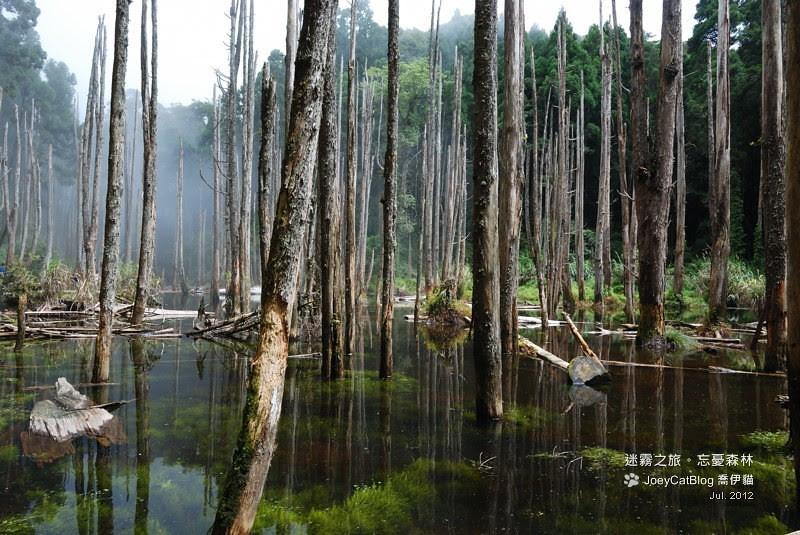 2012_0715_迷霧之旅。初訪忘憂森林DSC_5043