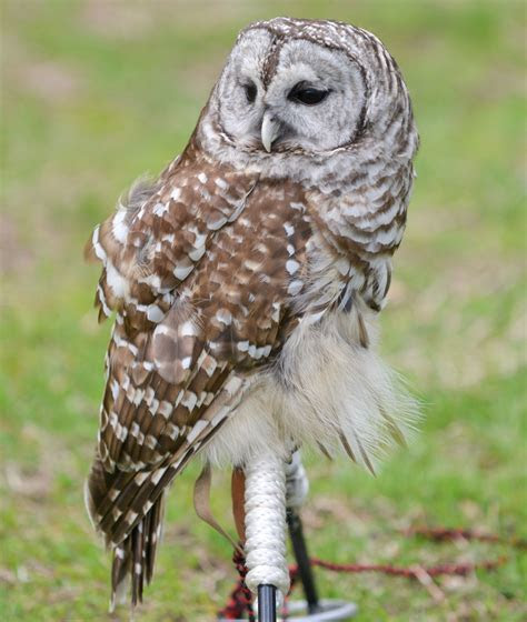 Places to Go Birding: Owls : NYC Parks