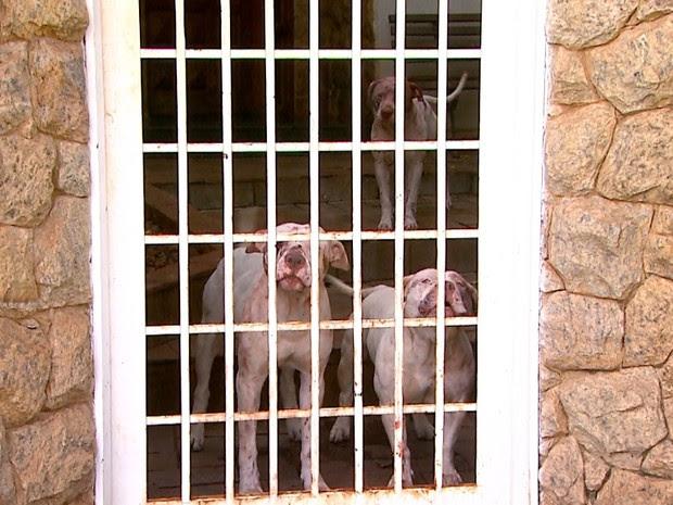 Cães conseguiram fugir da casa e atacaram jardineiro que trabalhava do outro lado da rua (Foto: Luciano Tolentino/EPTV)