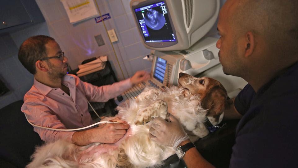 Ακτινολόγος κάνει υπέρηχο σε ένα άρρωστο σκυλί στο Ιατρικό κέντρο ζώων της Νέας Υόρκης, το οποίο αντιμετωπίζει 40.000 περιστατικά ετησίως.