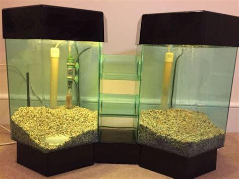 twin hexagon fish tank  bath somerset gumtree