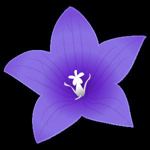 桔梗のイラスト1 花植物イラスト Flode Illustration フロデイラスト