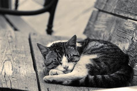 Fondo de Pantalla de Gato, Dormido, Banco, Madera, Mascota