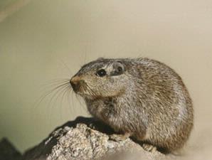 410 Koleksi Gambar Fauna Kawasan Neotropik Gratis