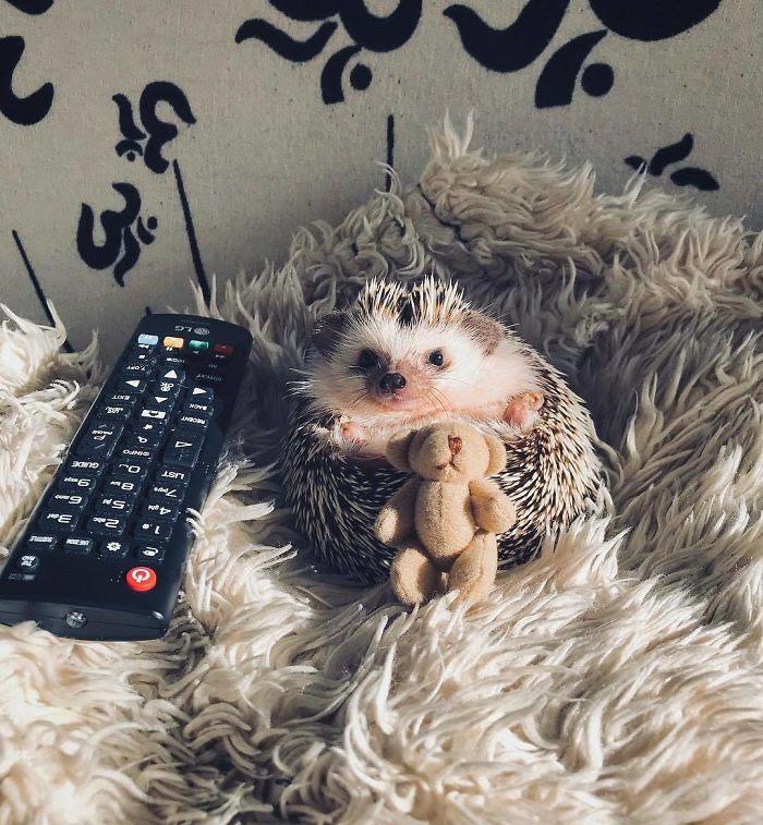 Je regarde mes émissions, pouvez-vous s'il vous plaît être tranquille?