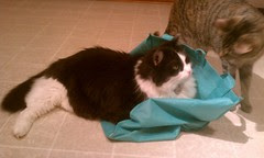 Josie relaxing on a Publix bag...