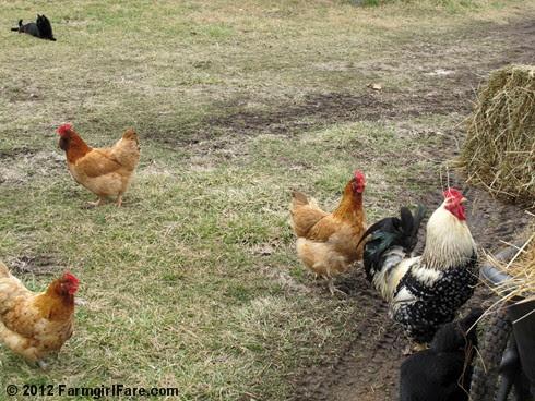 Hay inspectors 5 - FarmgirlFare.com