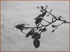 05 rosebud monochrome