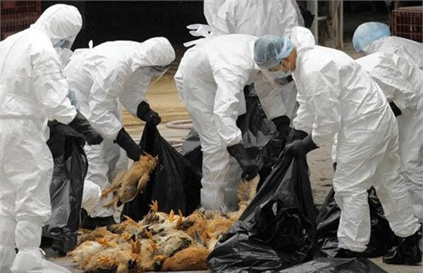 cúm gia cầm, cúm H7N9, Bộ Y tế, Cục Y tế dự phòng