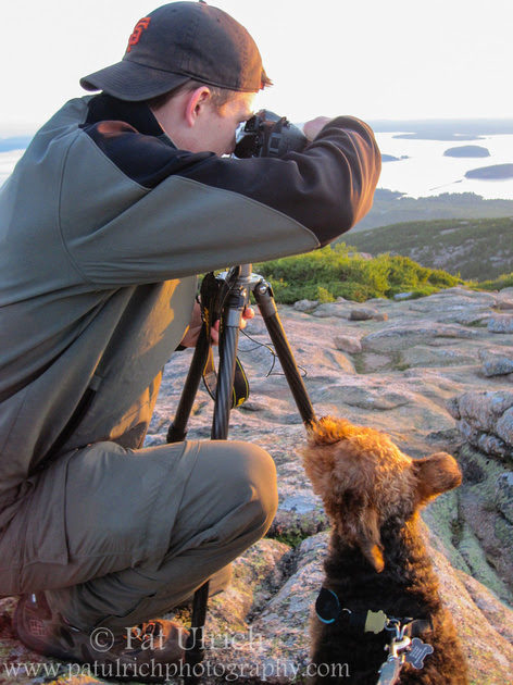 Dog watching his owner photograph the sunrise in Acadia National Park