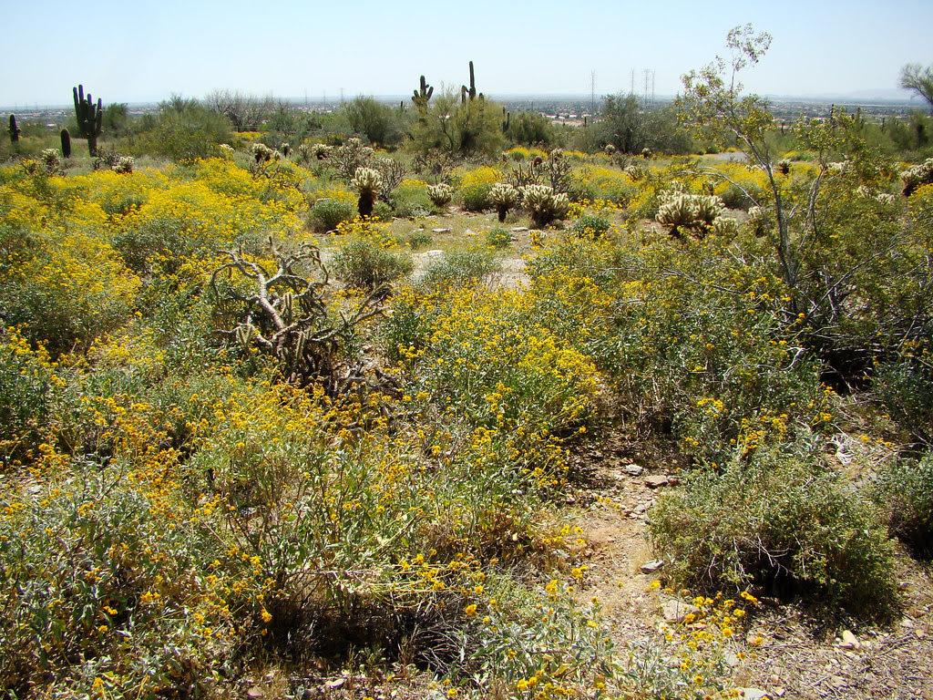 DSC00602 Taliesin West desert view