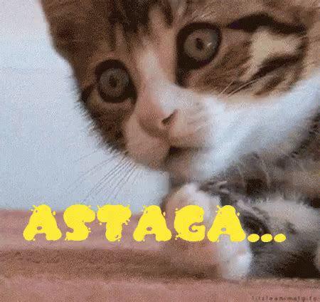 kucing gifs tenor