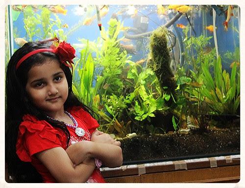 Marziyas Fish Tank by firoze shakir photographerno1