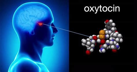 Benefits of Oxytocin in Autism Spectrum Disorders ? America Herald