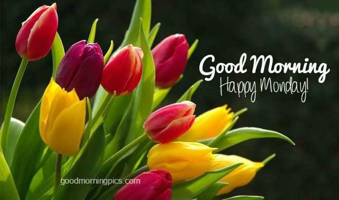 Pictures Happy Monday Goodmorningpicscom