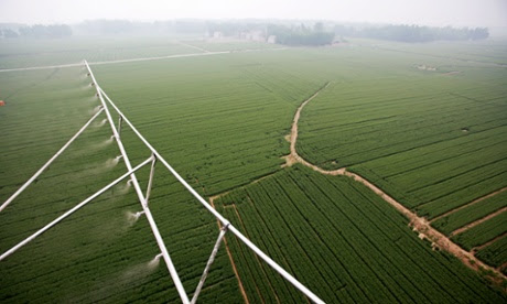 Farmers used helicopter to insecticide and fertilize wheat crops in Henan province, China.