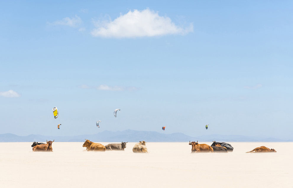Αγελάδες και αετοί : Tarifa Beach, Ανδαλουσία, Ισπανία. (© Andrew Μοχλός / National Geographic Photo Contest )