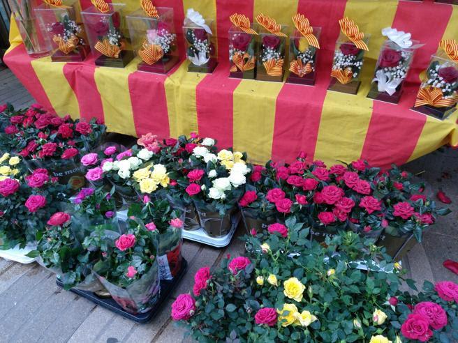 La rosa es la protagonista de Sant Jordi en múltiples formatos, desde ramos hasta pequeños rosales