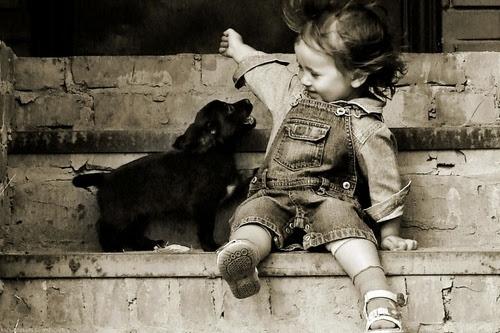 baby, cute, dog, love, puppy