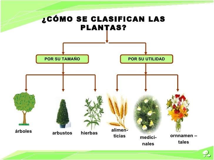 Revoluci n verde c mo se clasifican las plantas for Como se llaman las plantas ornamentales
