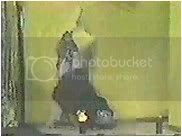 Image hosted by Photobucket.com