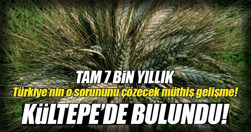 "Résultat de recherche d'images pour ""7 bin yıllık buğday  metin öztürk"""