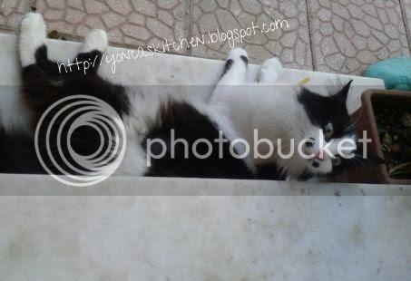 photo 4bac3971-f05a-4089-b4bf-99ec9f0f049c_zps6lq5maae.jpg