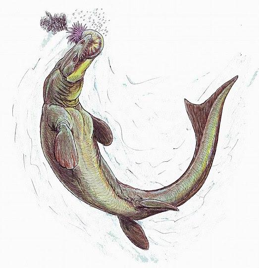 File:Prognathodon3.jpg