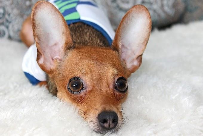 ¿Qué hay que hacer si a nuestro perro le suenan bastante las tripas?
