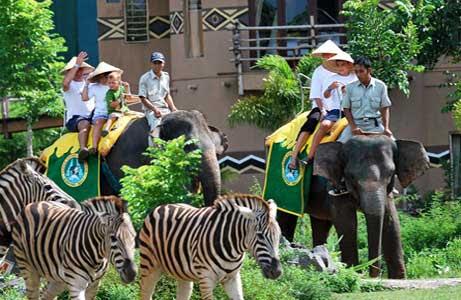 Bali Safari Marine Park Tour | Bali Tour Operators