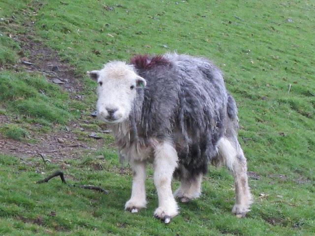 Lake District April 2012 (28)