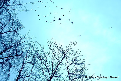 blue-sky-with-trees-and-birds