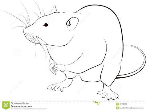 Rat sketch stock vector. Illustration of rodent, clipart   43713465