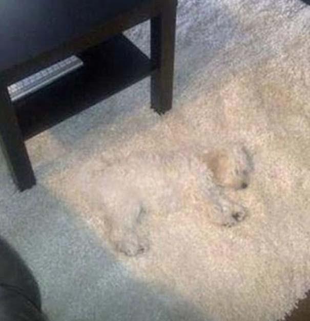 Όταν τα ζώα παίζουν κρυφτό (13)