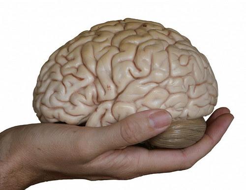 Cérebro Normal