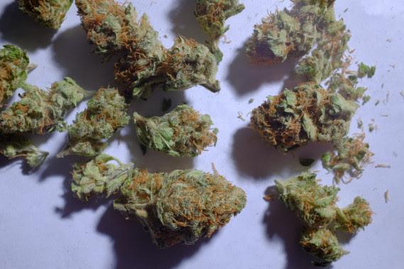 weed colorado
