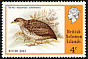 Red-backed Buttonquail Turnix maculosus