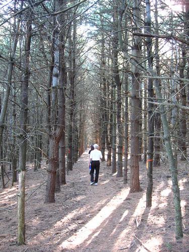 Orange Trail