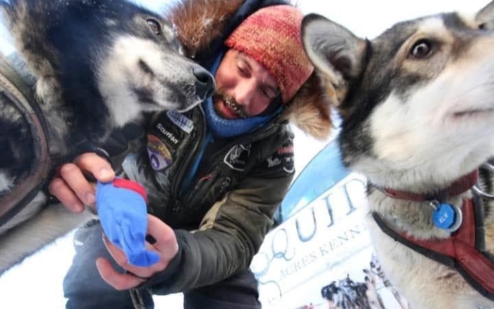 Race veteran Cody Strathe booties one if his lead dogs, Nukluk, as he prepares his team in the staging area during the restart of the Iditarod Trail Sled Dog Race.