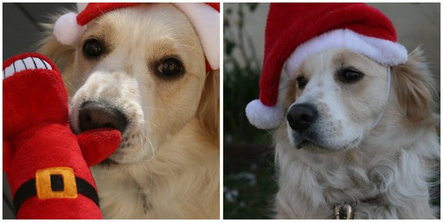 Cidney Christmas 2012