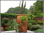 pot involving herbs