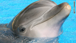 Hundreds of dead bottlenose dolphins are washing ashore on the Gulf Coast.