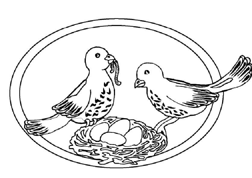 ausmalbilder vogel im fruhling