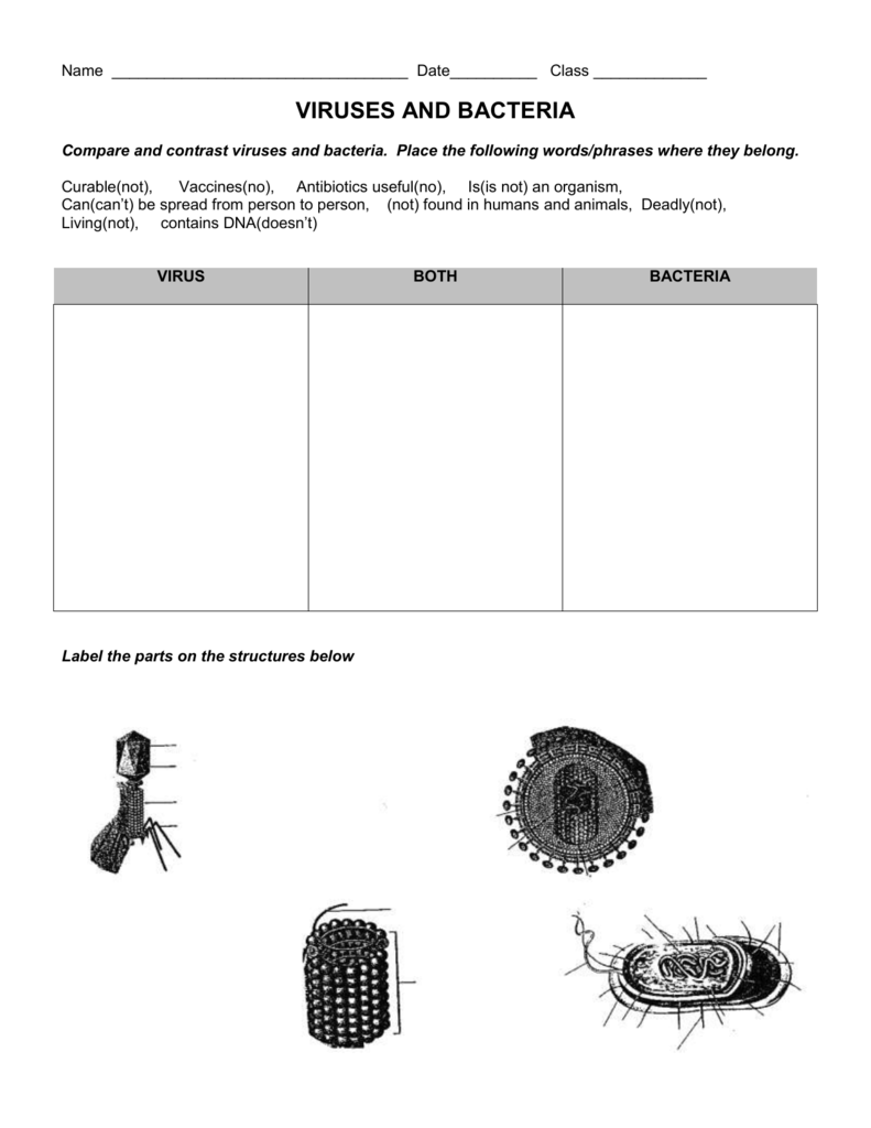 worksheet. Virus And Bacteria Worksheet. Grass Fedjp Worksheet Study Site